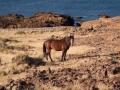 voyage-argentine-parc-national-cabo-dos-bahias-020