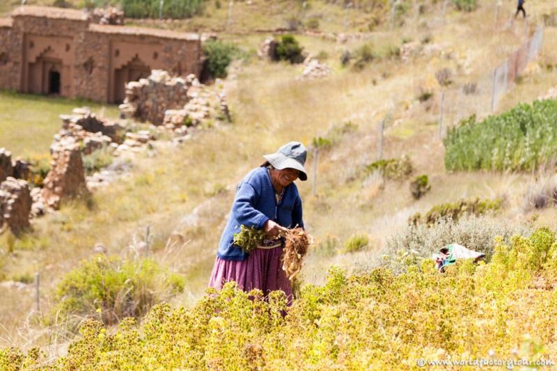 voyage-bolivie-lac-titicaca-isla-sol-luna-05