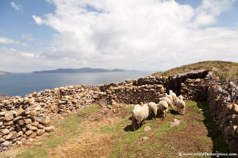 voyage-bolivie-lac-titicaca-isla-sol-luna-06