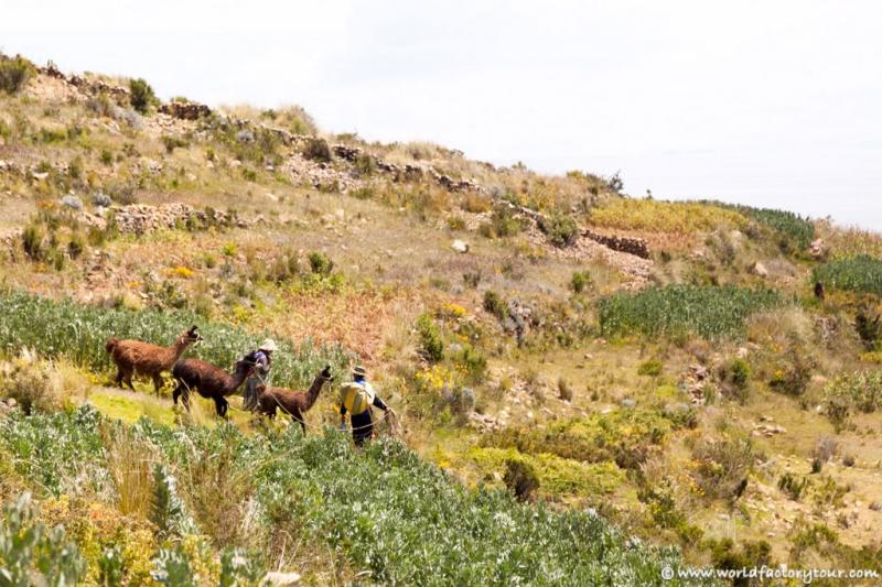 voyage-bolivie-lac-titicaca-isla-sol-luna-15