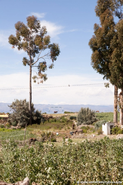 voyage-bolivie-lac-titicaca-isla-sol-luna-30