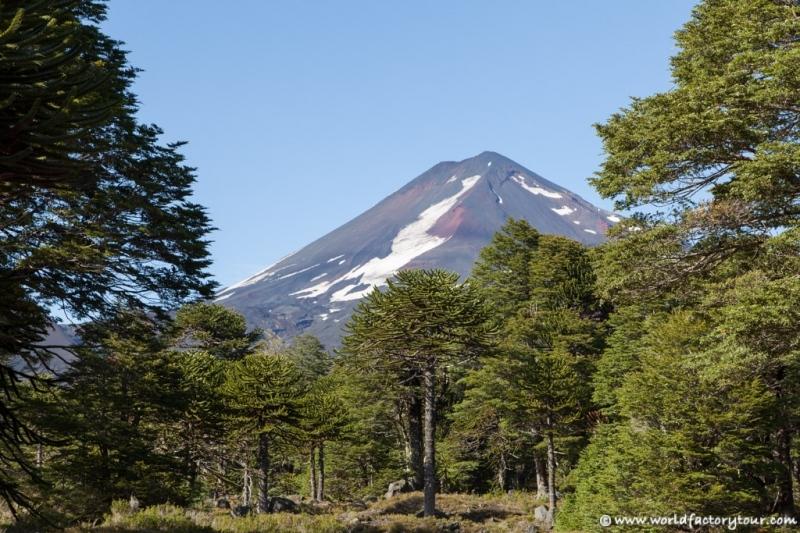 voyage-chili-region-lacs-parc-national-conguillio-2