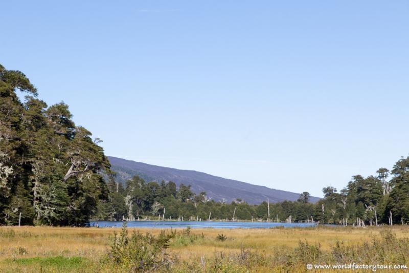 voyage-chili-region-lacs-parc-national-conguillio-11