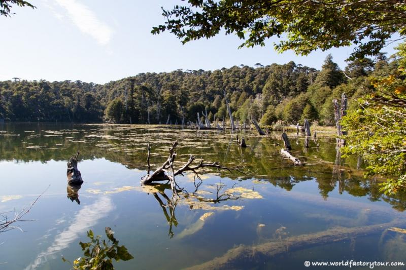 voyage-chili-region-lacs-parc-national-conguillio-7