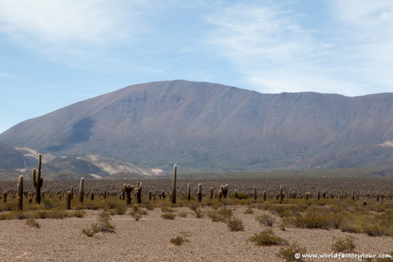 voyage-argentine-salta-tren-de-las-nubes-12
