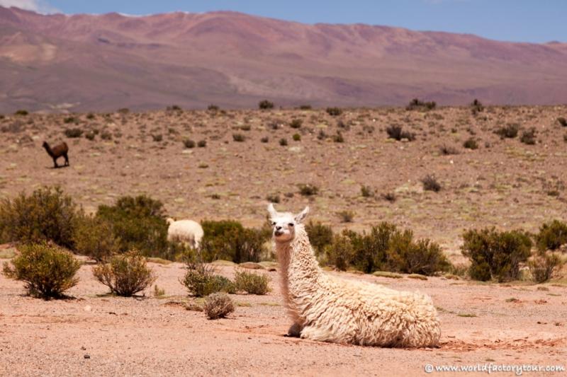 voyage-argentine-salta-tren-de-las-nubes-48